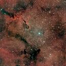 IC 1396 Elephant Trunk Nebula,                                Jay Crawford