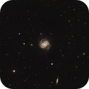 Messier 100,                                Andrew Wall