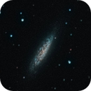 The Dragon 'Lonely' galaxy - NGC 6503,                                Rich Sky