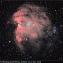 NGC 2174/2175, Monkey Head Nebula, (HαR)RGB, 13-16 Nov. 2018,                                David Dearden