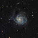 M101,                                Cristiano Gualco