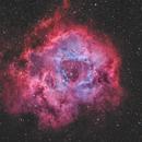 The Rosette Nebula NGC 2237-9,NGC 2246 HOO(+SHO20%)+RGB(StarColor),                                Masahiro Takahashi