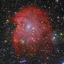 NGC 2174 Monkey Head Nebula,                                Berendey
