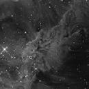 Fox Fur nebula in NGC2264 in mono,                                Sara Wager