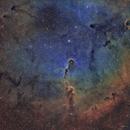 Elephant Trunk Nebula IC 1396A SHO Hubble Palette RASA 8,                                Brandon Tackett