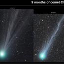 9 months of comet C/2014 Q2 Lovejoy,                                Adriano Valvasori