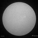 Solar Disk / AR 12713 (monochrome),                                Damien Cannane
