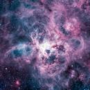 Tarantula Nebula NGC 2070,                                James Baguley