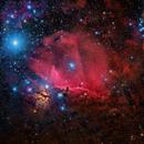 IC 434- The Horsehead Area (Mosaic) ,                                Federico Pelliccia