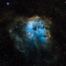 Tadpoles Nebula (IC410) - SHO,                                dswtan