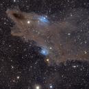 LDN 1235: Dark Shark Nebula,                                Yizhou Zhang