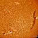 Sun in h-alpha (27 sept 2015, 13:27),                                Star Hunter