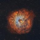 Sh2-170 The Little Rosette Nebula in SHO palette,                                Chad Leader