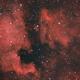 North America and Pelican Nebulae,                                Shane Jones