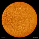 Sun - 3/13/2020,                                Damien Cannane