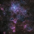 Tarantula Nebula - NGC 2070,                                Miles Zhou