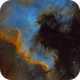 NGC7000 North America Nebula,                                Peter Jenkins