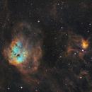 IC410 Tadpoles Nebula in SHO,                                Tommy Lease