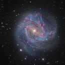 Messier 83, bared spiral galaxy in Hydra,                                José Joaquín Pérez