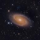 M81,                                Thomas Kings
