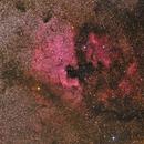 NGC7000 - North America Nebula,                                Siegfried
