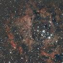 Rosette Nebula NGC 2237,                                Philipp Weller