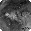 Cone and Christmas Tree cluster in Ha,                                Paul Werner S.