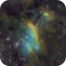 Prawn Nebula,                                Kevin Osborn