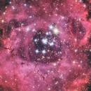 Rosette Nebula,                                Daniele Gasparri