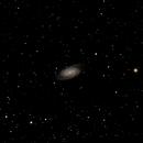 NGC  2903 Barred Galaxy,                                Damian Russo
