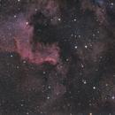 North American Nebula DSLR,                                Norman Revere