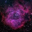 NGC 2237 - Rosette Nebula,                                Ray Ellersick