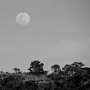 The Moon in the Afternoon,                                Odilon Simões Corrêa
