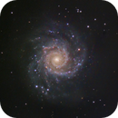 M74 The Phantom Galaxy,                                Shannon Calvert