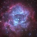 NGC 2244  Open Cluster & Rosette Nebula,                                Camarone