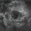 Rosette Nebula - Ha,                                Greg Polanski
