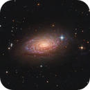 The Sunflower Galaxy,                                Gabe Shaughnessy