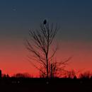 Venus and a Snowy Owl - rural west Ottawa Canada,                                Rudy Pohl