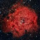 NGC2237 - Rosette Nebula,                                Tim Hutchison