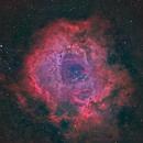 Rosette Nebula,                                Xplode