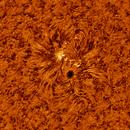 SUN with active region 2770,                                Luk
