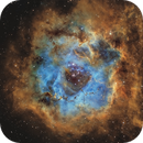 Rosette Nebula,                                David Schlaudt