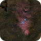 NGC2264 Christmas Tree Cluster and Cone Nebula,                                niteman1946