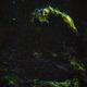 Veil Nebula Mosaic in SHO,                                Andrew Harrell