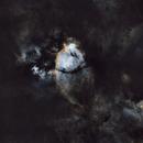 Fish head Nebula,                                Roger Wilkinson
