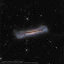 NGC 3628, the Hamburger Galaxy,                                Steve Cooper