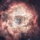Rosette nebula,                                Deddy Dayag