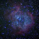 Rosette Nebula,                                Nils Langner