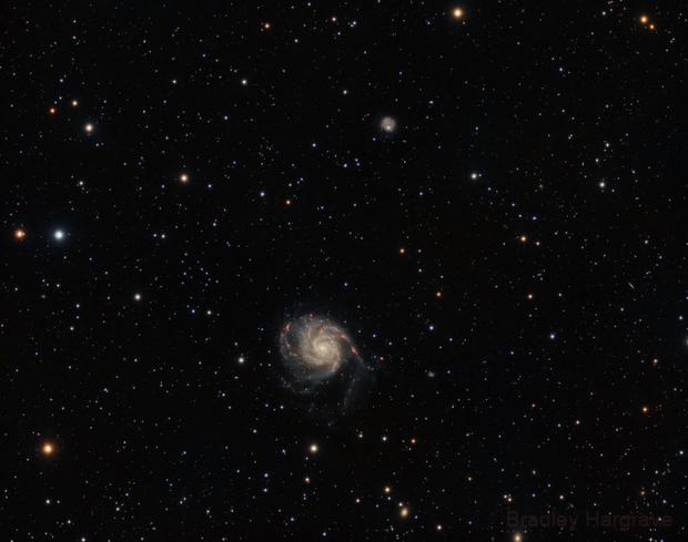 Widefield Pinwheel & NGC 5474,                                Bradley Hargrave
