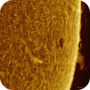 Solar Plage, Filament & Prominences, Colored, April 18th 2017,                                Martin (Marty) Wise